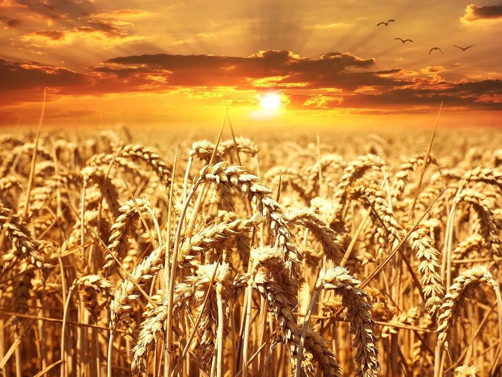 A quoi sert la météo agricole ?